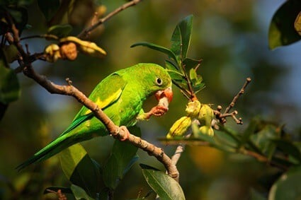 how parrots feed and digest food