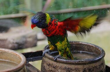 how to bathe a parrot