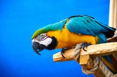 how to care for macaw parrots