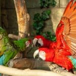 how to deal with a hormonal parrot