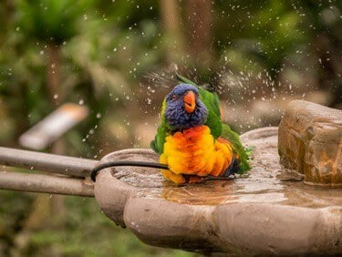 how to dry your parrot after a bath