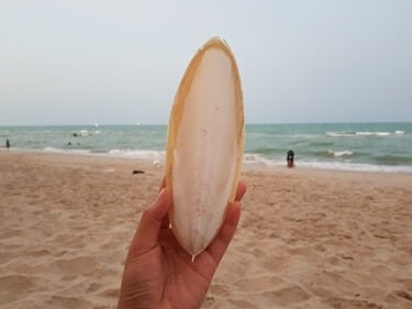 how to get a bird to use cuttlebone