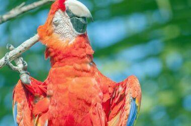 how to get fleas off parrots