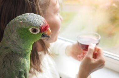 how to keep parrot dust down