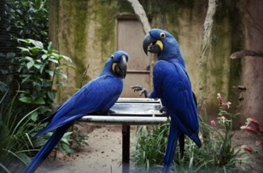 how to make two parrots get along