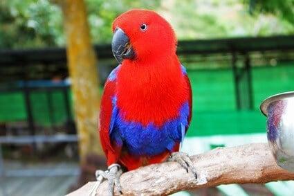 how to sex parrots