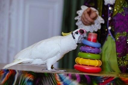 how to teach a parrot to do tricks