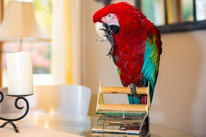 is my parrot overweight?