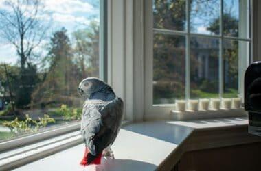 is sun good for parrots?