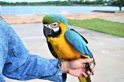 law on parrots