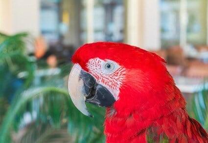 parrot brain size
