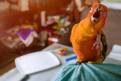 parrot choking on food