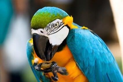 parrot digestive problems