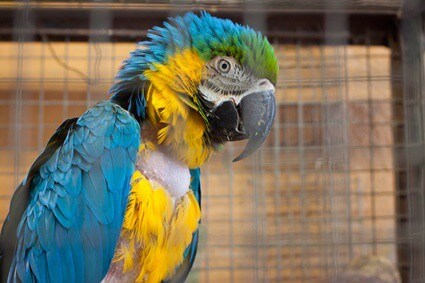 parrot fungal infection treatment
