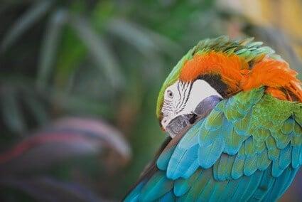 parrot having nightmares