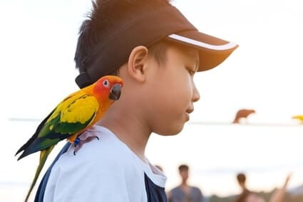 parrot height dominance