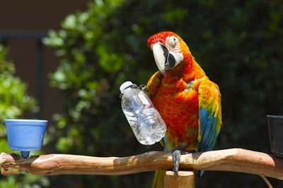 parrot intelligence facts