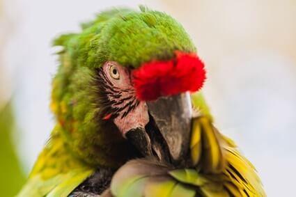 parrot making weird noises
