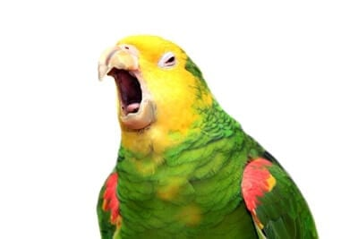 parrot not talking anymore