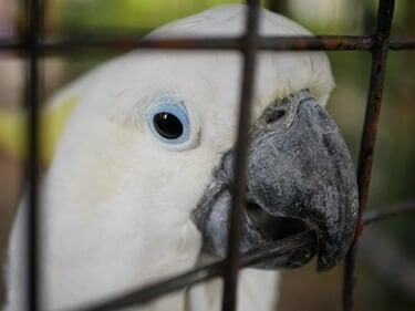 parrot rubbing beak on cage