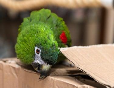 parrot safe flea treatment