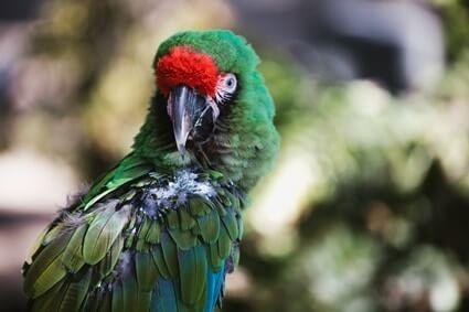 parrot vomiting clear liquid