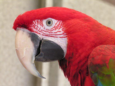 parrots beak looks cracked
