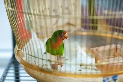 parrots eating own poop