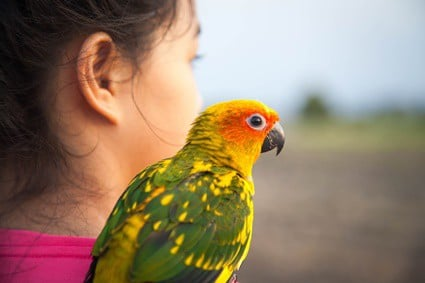 parrots preening owners