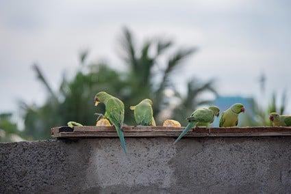 safe vegetables for parrots