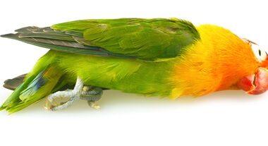 should I bury a dead parrot?