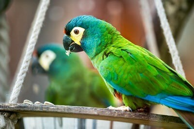 should you give a parrot a mirror?