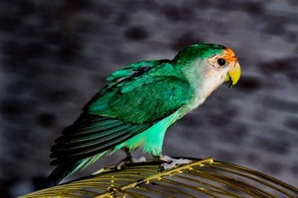 stressed parrot behavior