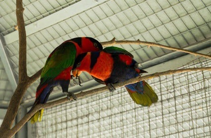 toe-tapping syndrome in parrots