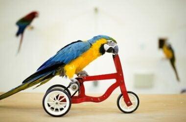 tricks parrots can do