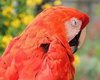 what do parrots have nightmares about?