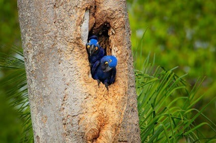 what does a parrot nest look like?