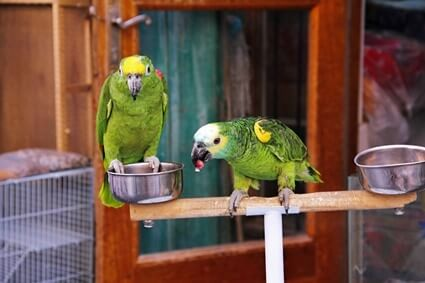 what foods can kill a parrot?