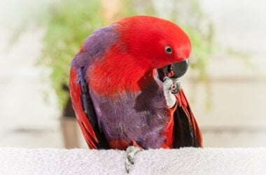 what is foot clenching in parrots?