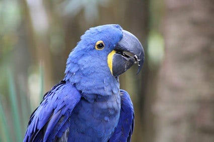 what is the hole under a parrot's beak?