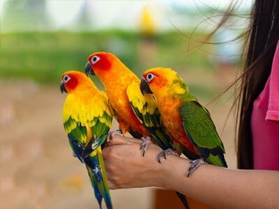 what is the most gentle parrot?