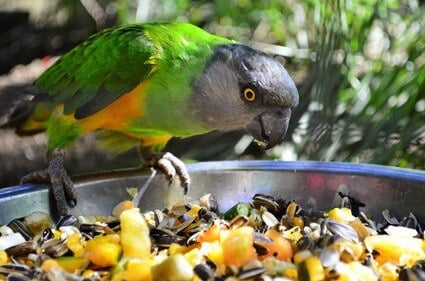 what kind of vegetables do parrots eat?