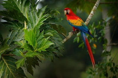 what predators do parrots have?