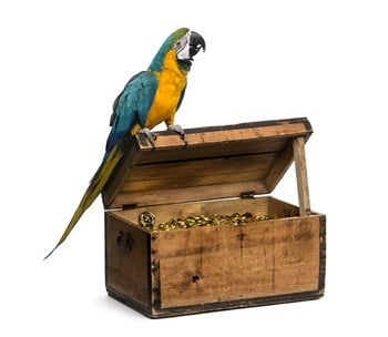 what type of parrots do pirates have?