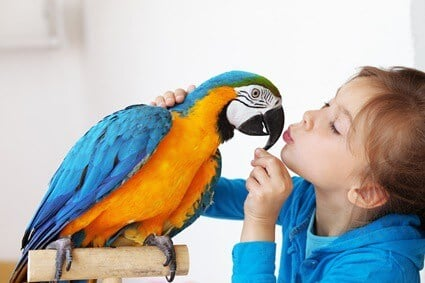 where not to pet a bird
