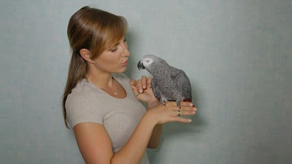 why can parrots speak English?