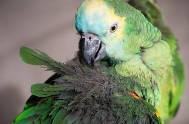 why did my parrot die so suddenly?