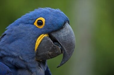 why do parrots have a gap under their beak?