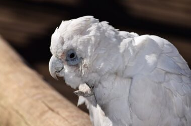 why do parrots live so long?