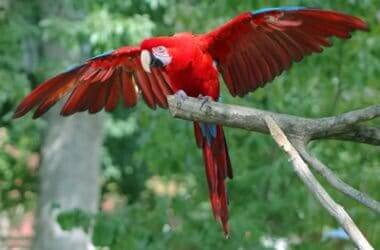 why do parrots need exercise?